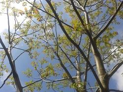 portrait der walnussbaum den menschen ein guter alter freund. Black Bedroom Furniture Sets. Home Design Ideas